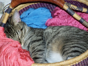 rocky sleeping in his basket