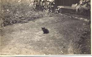 Old postcard photo of a small, black kitten